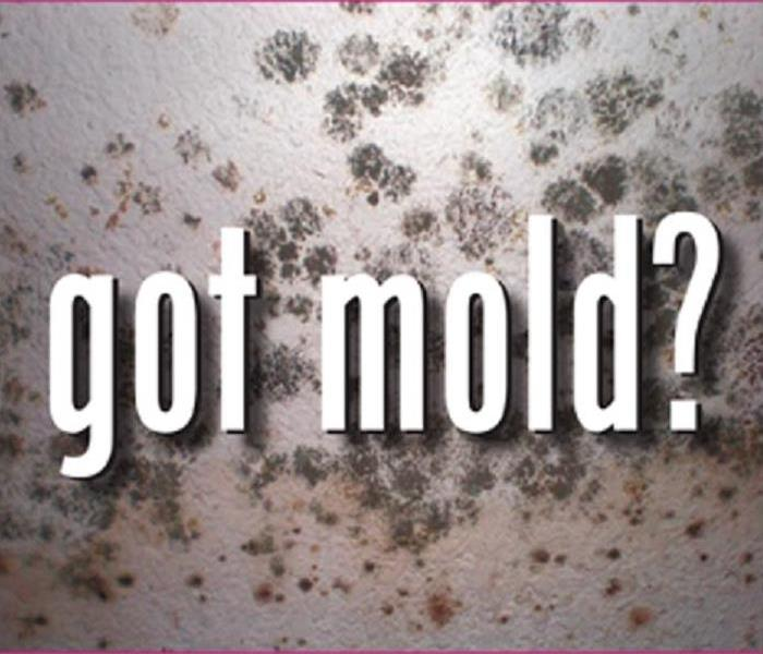 Mold Remediation MOLD: Do vs. Don't